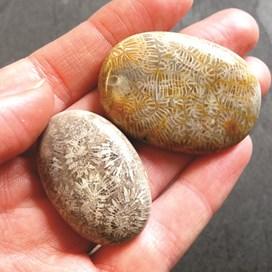 inst fossilised coral.jpg